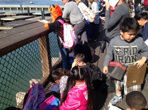 Students observing sea lion behavior for a project about marine life.